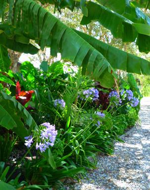 garden-plantation